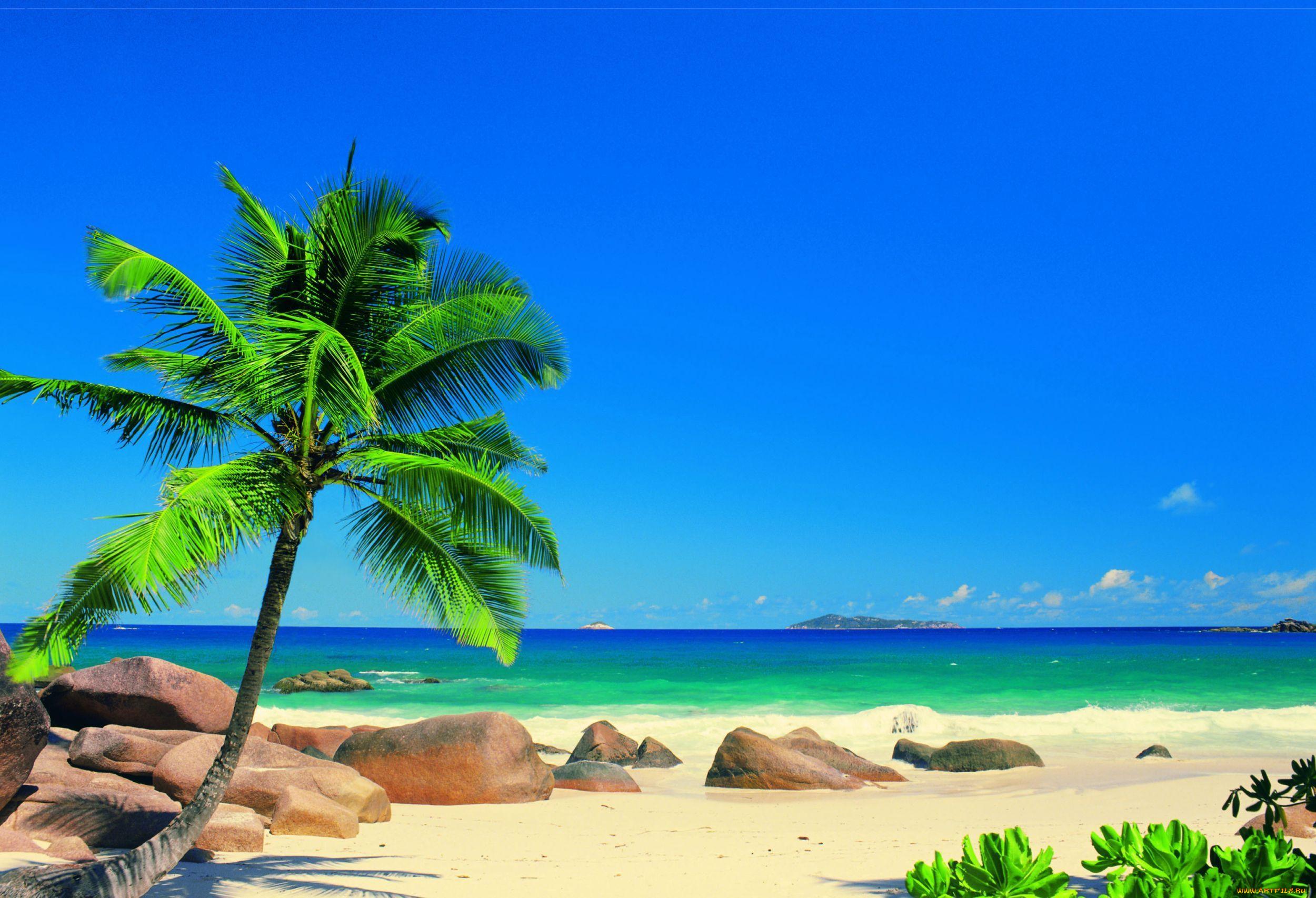 Природа тропики берег море пляж